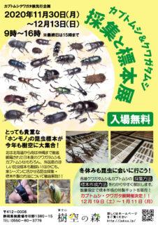 今年の冬はカブクワ?! 富士山樹空の森で採集と標本展開催!