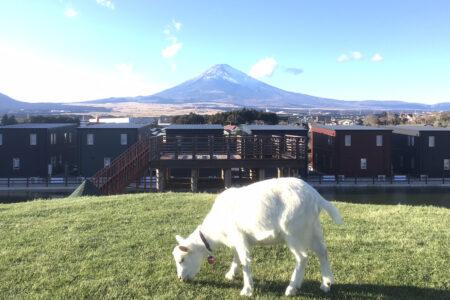 山羊の丘コテージ